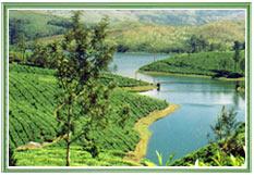 Munnar Hills, Kerala