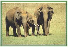 Nagarhole Wildlife Sanctuary, Karnataka