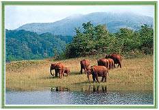 Periyar Wildlife, Kerala